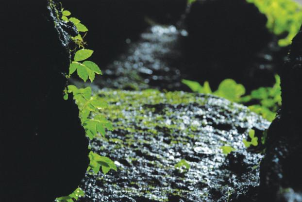 花草赋予石洞生命的温度