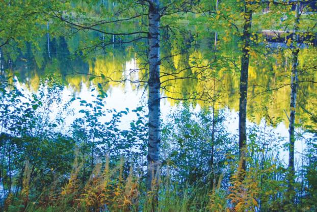 mushroom-finland-lake