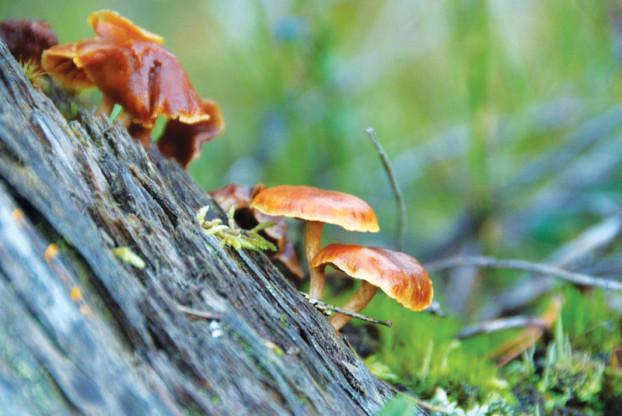 musroom-finland-nature