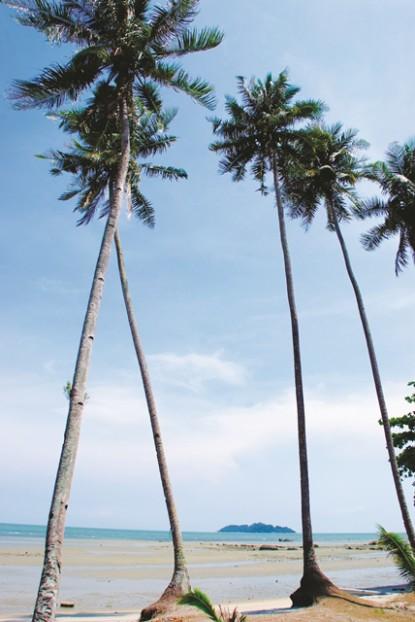 海边的椰树风光