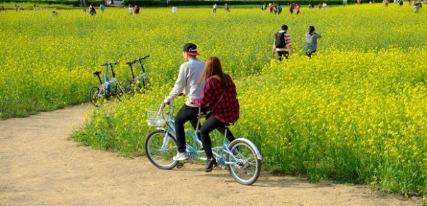 游览庆洲最理想的方式就是骑单车悠游