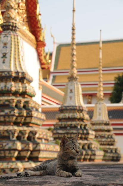 Thai (4)