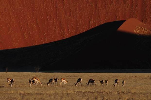 鹿群使沙丘更富生命力